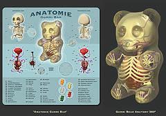 Anatomie des guimourson