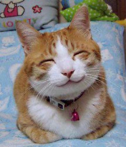 So happy, smiling cat
